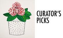 Curator's Picks